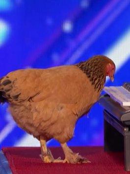 Cười chê cô gà mái, giám khảo Got Talent ôm đầu hối hận khi âm thanh này vang lên