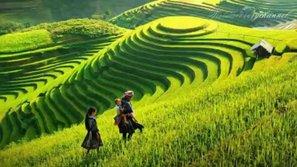 Thân thương hai tiếng Việt Nam qua những bài hát trẻ
