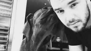 """Liam Payne từng """"được cứu"""" bởi thú cưng"""