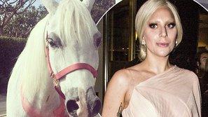 Lady Gaga được tặng một chú ngựa trắng nhân dịp Giáng Sinh