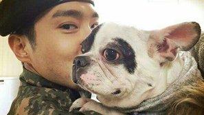 Scandal chó cưng của Choi Si Won cắn chết người
