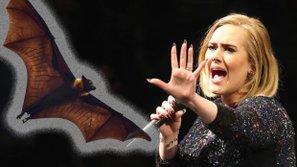Chuyển động 24h US-UK:  Adele pha trò chạy tán loạn khi dơi bay vào trong concert