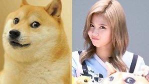 Truy tìm cô nàng xinh yêu cực giống cún Shiba Inu đến từ