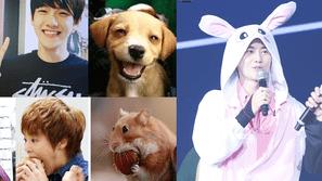 Khó ai tin được những Idol và động vật này lại giống nhau như đúc!
