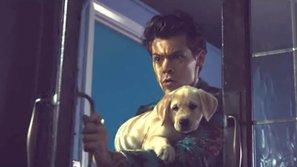 Soi khoảnh khắc cực đáng yêu của Harry Styles và những chú cún cưng